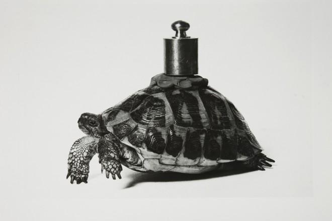 00_claudio-abate-1943-senza-titolo-io-non-amo-la-natura-di-vettor-pisani-1970-gelatina-bromuro-dargento-galleria-civica-di-modena-660x440