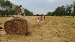 """I """"Sabati Centofiori"""" laboratori in fattoria @ Fattoria Centofiori"""