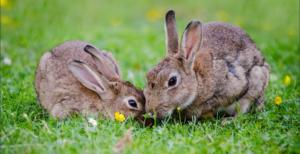 Visite al giardino dei conigli @ CEAS
