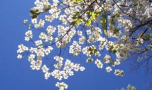 Racconti sotto l'albero a Villa Ombrosa di Modena @  Parco di Villa Ombrosa  | Modena | Emilia-Romagna | Italia